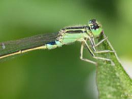 绿野虫踪Ⅳ