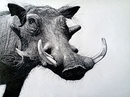大KAI动物钢笔画《疣猪》——另类<佩奇>