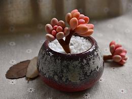 粘土多肉盆栽