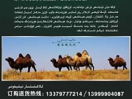 骆驼奶宣传单设计