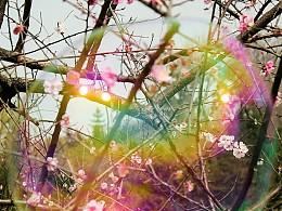 《桃花开》摄影游记