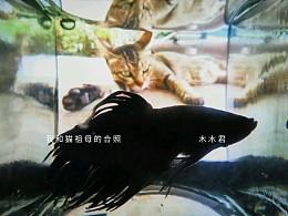 小狮王和猫祖母的合照
