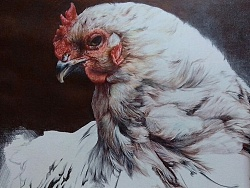 《鸡年——画鸡》