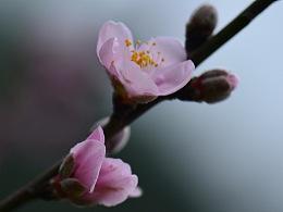 二月春風暖  十里桃花開