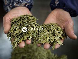 产品摄影-龙井茶