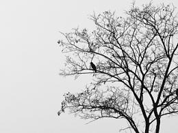摄影:老树昏鸦