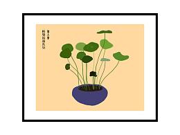 植物插画,铜钱草