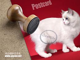 猫咪的手札