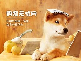一个宠物商城网站