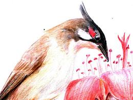中国常见鸟类(一)