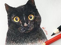 彩铅----黑猫