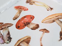 水彩 蘑菇🍄