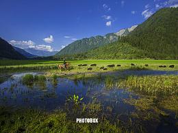 九寨藏香猪