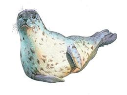 momo的彩铅世界,彩铅手绘各种鱼各种螺,名字都好难记