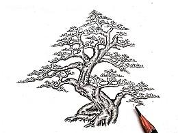 九里香盆景设计效果图