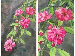 水彩花卉—蔷薇吧