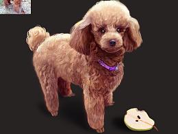 爱吃梨子的狗狗(我家悠悠)