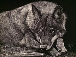 李子哥刮画作品《狼的世界》