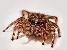 画一只小蜘蛛