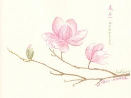 每天送自己一束花——木兰