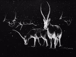 黑色卡纸上的涂改液-五只藏羚羊