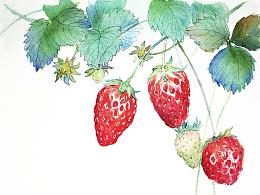 手绘水彩果子系列第二发