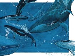 《鲸鱼的歌》