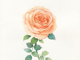 水彩手绘,一组玫瑰和月季