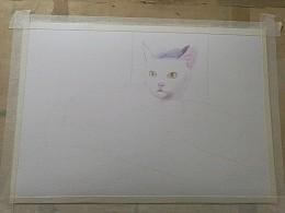 彩铅的白猫