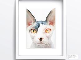 《可爱猫咪绘》书稿/原稿