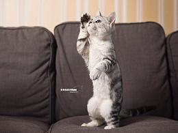 宠物摄影师傅dante 猫
