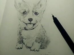 素描柯基犬