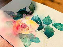 水彩花卉练笔--蔷薇