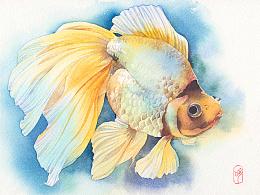 金鱼过程图