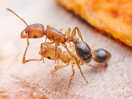 微距 小小蚂蚁2