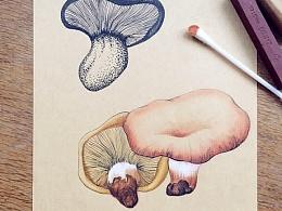 ~~~ 蘑菇 而已 ~~~