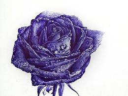 蓝色妖姬  圆珠笔手绘