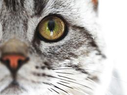 摄影作品-猫