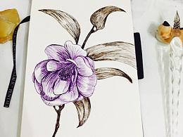 手绘合集-蘸水笔钢笔画儿