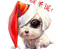 【萌宠 by 雪娃娃】备战圣诞!