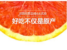 夜风团队作品 食品类 水果 橙子 脐橙