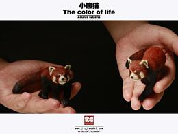 究極model studio The color of life - 小熊貓
