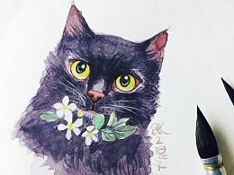水彩----黑猫