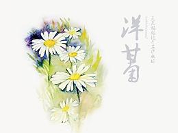 花水(樱花 玫瑰 蓝莲花 香蜂草 洋甘菊)
