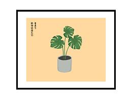 龟背竹 植物插画