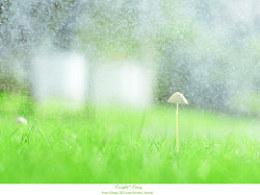 下雨天小蘑菇