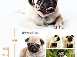 宠物app界面 星宠二级