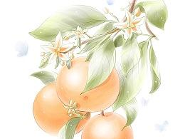 IPAD PRO画的一组花草商业插画,附带部分绘制过程视频