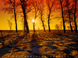 冬·雪·草,光·影·树