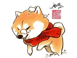 【柴犬枸杞】雪地里的一抹红
